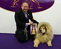 2014 Westminster Kennel Club Dog Show (12486388585).jpg