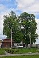 46-227-5011 Kulykiv Lindens RB 18.jpg