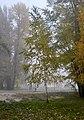 5 Туман в Гідропарку.jpg