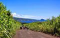 Açores 2010-07-18 (5039103019).jpg