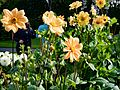 ADD SOME COLOUR TO YOUR LIFE (FLOWERS IN A PUBLIC PARK)-120130 (28984761640).jpg