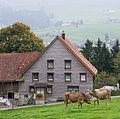 AR Halden Bauernhaus cows close-up1.jpg