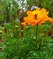 A Beautiful Yellow Flower.jpg