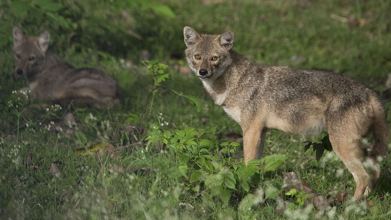 Spot Wildlife off Kabini River Lodge