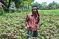 A farmer in Bangladesh.JPG