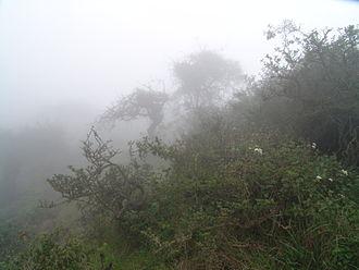 Lomas - A fog oasis at the Atiquipa Lomas, Peru.