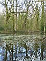 A reflective moment in Hampshire - geograph.org.uk - 1804216.jpg