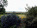 A south-west view over Honington vicarage garden, Lincolnshire, England 01.jpg
