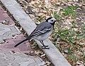 Ab bird 006.jpg
