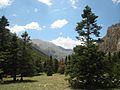 Abies cilicica, Aladağlar Mountains 2.jpg