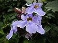 Aburi garden 13.jpg