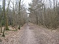 Access track in Limpsfield Chart towards Great Chart - geograph.org.uk - 1755823.jpg
