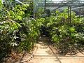 Acharya Jagadish Chandra Bose Indian Botanic Garden - Howrah 2011-03-20 2059.JPG
