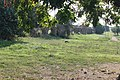 Acquedotto Alessandrino Tor Tre Teste 22.jpg