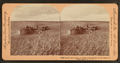 Acres and acres of wheat, harvesting in the state of Washington, U.S.A, by Keystone View Company.png