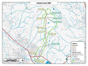 Adobe Creek (Sonoma County, California) - Adobe Creek 2007 Steelhead Trout Biosurvey