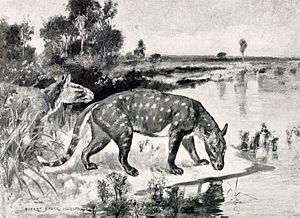 Tylopoda - Life restoration of Agriochoerus antiquus
