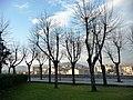 Alberi d'inverno - panoramio.jpg