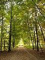 Allee im Wald 02.jpg