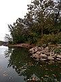 Allegheny River Kittanning Fall 2016 - panoramio - Ron Shawley (19).jpg