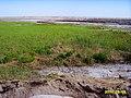 Alxa Zuoqi, Alxa, Inner Mongolia, China - panoramio - 摩游乐 (122).jpg