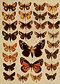 American insects (1904) (18152396311).jpg