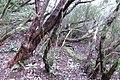 Anaga Mountains(20).jpg