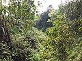 Annihilated Saraswati River near Ruined Nilkuthi at Manirampur in Hooghly 13.jpg