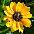 Ant & Bee (5598762269).jpg