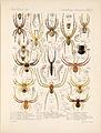 Arachnida Araneidea Vol 1 Table 15.jpg