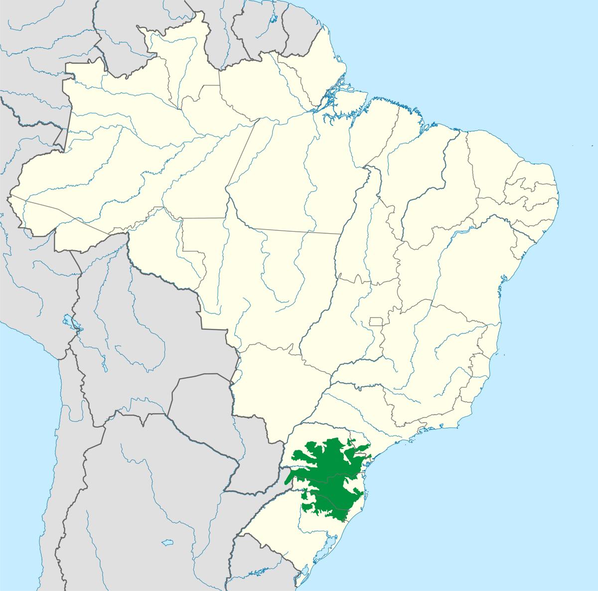 Араукариевый лес