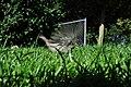 Arboretum - Passer domesticus 2010-09-20 15-28-42.JPG