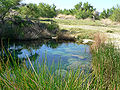 Ash Meadows Point of Rocks Springs 3.jpg