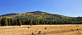 Aspen on mountainside (3971469461).jpg