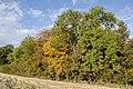 Autumn Colours - geograph.org.uk - 1540992.jpg