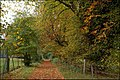 Autumn at Rabbit Hill, Ballymena - geograph.org.uk - 581953.jpg