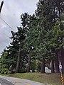 Avenue of Trees, Surrey, 2.jpg