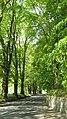 Avenue of limes, Moulin - geograph.org.uk - 1323315.jpg