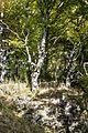 Bäume Schauinsland jm53901.jpg