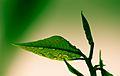 B Green (3962242666).jpg