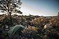 Backcountry campsite between Juniper Flats and Covington Flat (40733990183).jpg