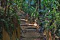 Bamboo stairs.jpg