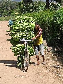 Banaan Vrucht Wikipedia