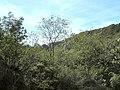 Banat,Nera Canyon - panoramio (67).jpg