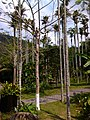 Baoting, Hainan, China - panoramio (16).jpg
