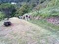 Barga, Province of Lucca, Italy - panoramio - jim walton (40).jpg