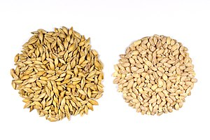 Barley - Barley Seeds with and without the outer husk.