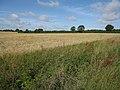 Barley field - geograph.org.uk - 1458589.jpg