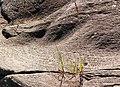Basalt rocks, Ardtoe - geograph.org.uk - 501239.jpg