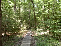 A skinny wooden trail continues ahead through through a forest.